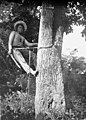 A 'Chiclero' at Work - in the forest area in Mexico - A Chiclero is a person who climbs the Chicle tree, the sap of which is the basis of chewing gum(GN03499) (cropped).jpg