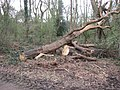 A Dead Tree had been Felled on Bookham Common - geograph.org.uk - 1236883.jpg