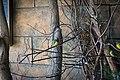 A Flash of Colour (10915959556).jpg