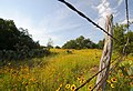 A common scene down a hill country highway. (24817548810).jpg