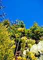 A garden near Scarborough-14 (4629747818).jpg