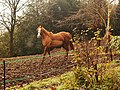 A horse on Bradley Hill, Soudley, Forest of Dean - geograph.org.uk - 1045915.jpg