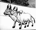 A pair of bullocks – the election symbol for the Congress Party in 1952.jpg