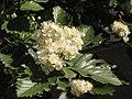 Ab plant 1730.jpg