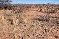 About two miles north-northeast of Cuchillo - Flickr - aspidoscelis.jpg