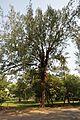 Acharya Jagadish Chandra Bose Indian Botanic Garden - Howrah 2011-01-08 9836.JPG