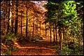 Aleja parkowa jesienią.jpg