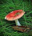 Algerine Swamp Natural Area (Revisited) (10) (29270874266).jpg