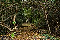 Allée verte pour des circuits écotouristiques dans la forêts de la Lama dans la commune de Zogbodomey au Bénin.jpg
