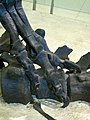 Allosaurus Claw (8555197623).jpg