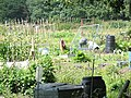 Allotments near Jennett's Hill, Bracknell - geograph.org.uk - 523150.jpg