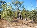 Almaden QLD 4871, Australia - panoramio (2).jpg