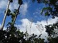 Along the Red Trail - Finca Esperanza Verde - Near Matagalpa - Nicaragua - 04 (31687189745).jpg