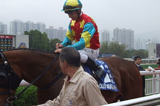 Ambitious Dragon New Zealand-bred Thoroughbred racehorse