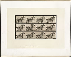 Animal locomotion. Plate 567 (Boston Public Library).jpg