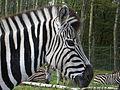 Animals in Monde Sauvage d'Aywaille 01.JPG