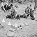 Animals in War 1939-1945 B6506.jpg