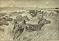 Animals in action; studies and stories of beasts, birds and reptiles; their habits, their homes and their peculiarities (1901) (14568735518).jpg
