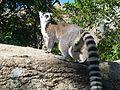 Anja réserve (Madagascar) - 04.JPG