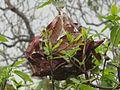 Ants nest.jpg