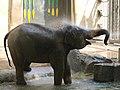 Antwerp Zoo (12210644425).jpg
