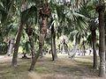 Aoshima Subtropical Botanical Garden 15.jpg