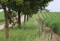 Aparagus hills - panoramio - stanzebla.jpg