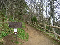 Appalachian Trail at Newfound Gap.JPG