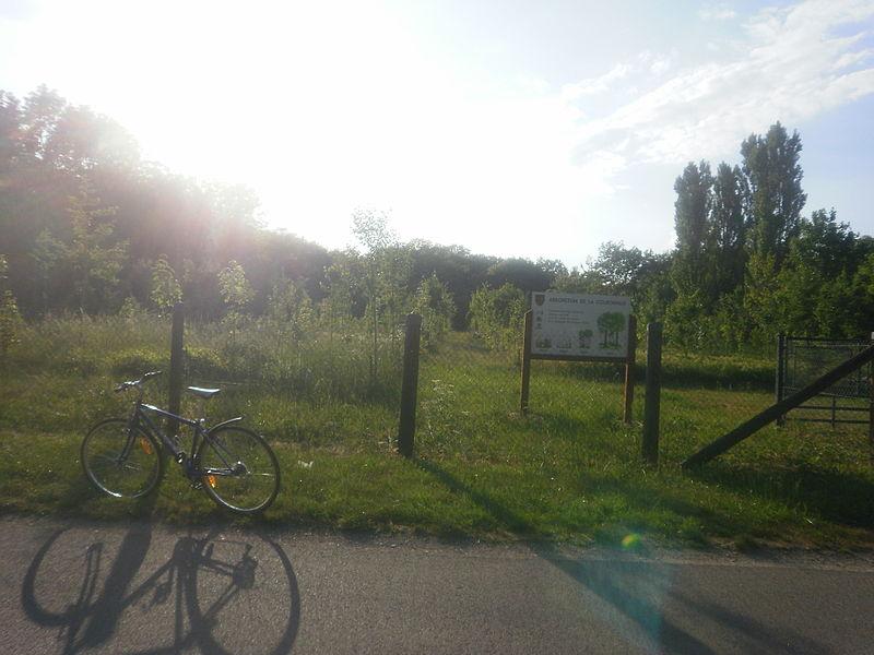 File:Arboretum de Premeaux-Prissey.JPG