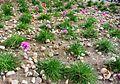 Archivists' Garden (2892538105).jpg