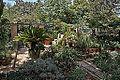 Argotti gardens-IMG 1413.jpg