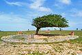 Arvore do Cabelo Penteado - Luis Correa PI.jpg