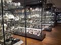 Ashmolean Museum Oxford European Ceramics Gallery 2014.jpg