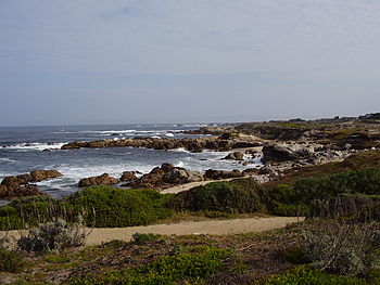 Asilomar State Beach California.jpg