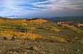 Aspens, Boulder Mountain (3678755867).jpg