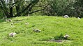 Assiniboine Park Zoo, Winnipeg (480561) (24613017832).jpg