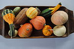 Assorted Cucurbita pepo and maxima gourds.jpg