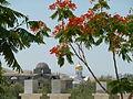 Atar Hatvila - Qaser Al Yahud P1020132.JPG