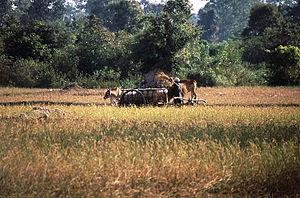 Landschaft in der Provinz Siem Reap zwischen den Tempeln von Angkor