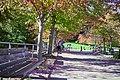 Autumn, Stanley Park Oct, 2015 - 21965145371.jpg