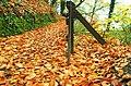 Autumn at Huntly Wood near Banbridge (3) - geograph.org.uk - 1046274.jpg