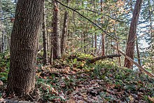 Temperate broadleaf and mixed forest - Wikipedia