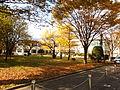 Autumn in Akita University.jpg