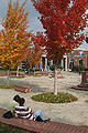 Autumn in the library quad at Middle Tennessee State University.jpg
