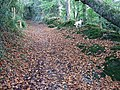 Autumn leaves - geograph.org.uk - 1019242.jpg