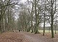 Avenue, Dorridge Park B93 - geograph.org.uk - 2196121.jpg