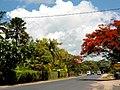 Avenue Ed Colardeau - panoramio.jpg