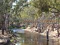 Avoca rivière du Victoria.jpg
