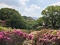 Azalea Valley in Mifuneyama Garden 2.jpg