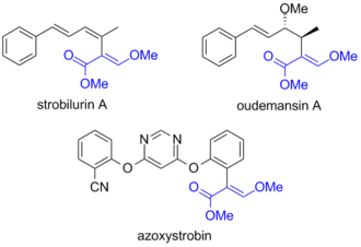 Azoxystrobin - Structures of the natural defense molecules strobilurin A and oudemansin A and the synthetic fungicide azoxystrobin. The common structural fragment responsible for the activity (toxophore) is highlighted in blue